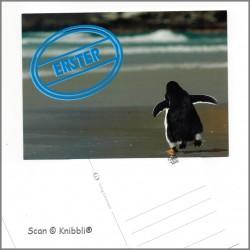 Postkarte Pinguin Erster