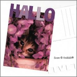 Postkarte Katze Hallo Glitzer