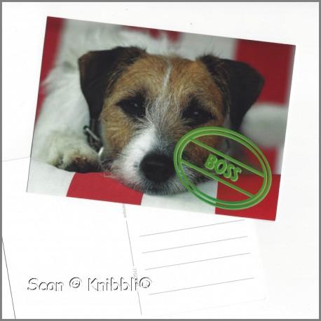 Postkarte Hund Boss