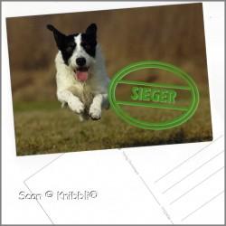 Postkarte Hund Sieger