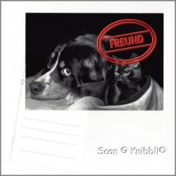 Postkarte Hund Katze FREUND